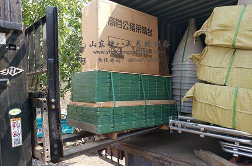 【四川】复合母猪产床性价比哪里找?猪八戒养殖设备厂家直销